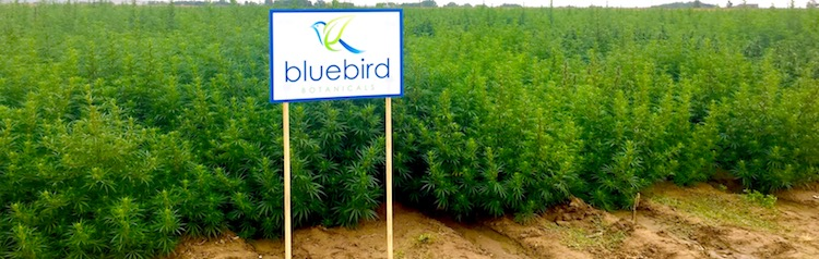 Bluebird Botanicals Hemp Farm